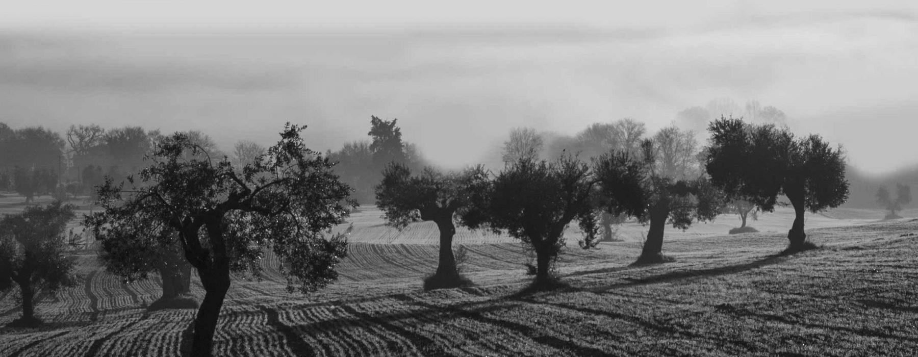 Lazio: un molino de aceite especial