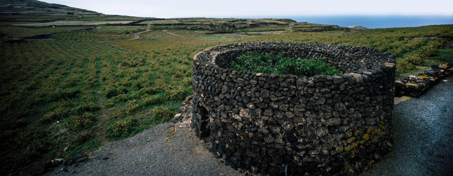 Pantelleria: 3000 ans d'histoire… les jardins Panteschi