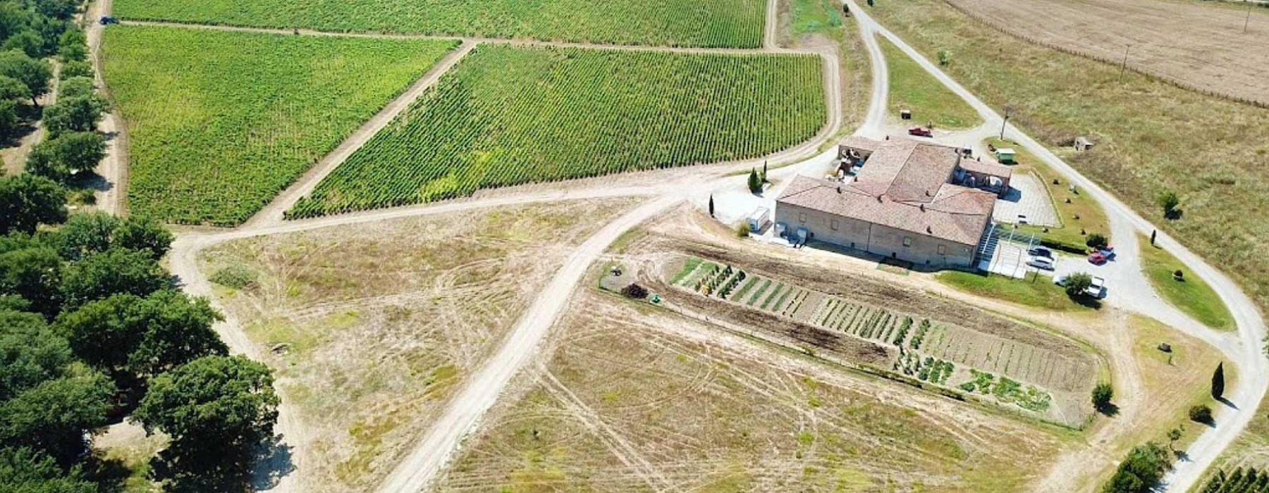 Trinoro e Passopisciaro: من توسكانا إلى صقلية للنبيذ الناجح