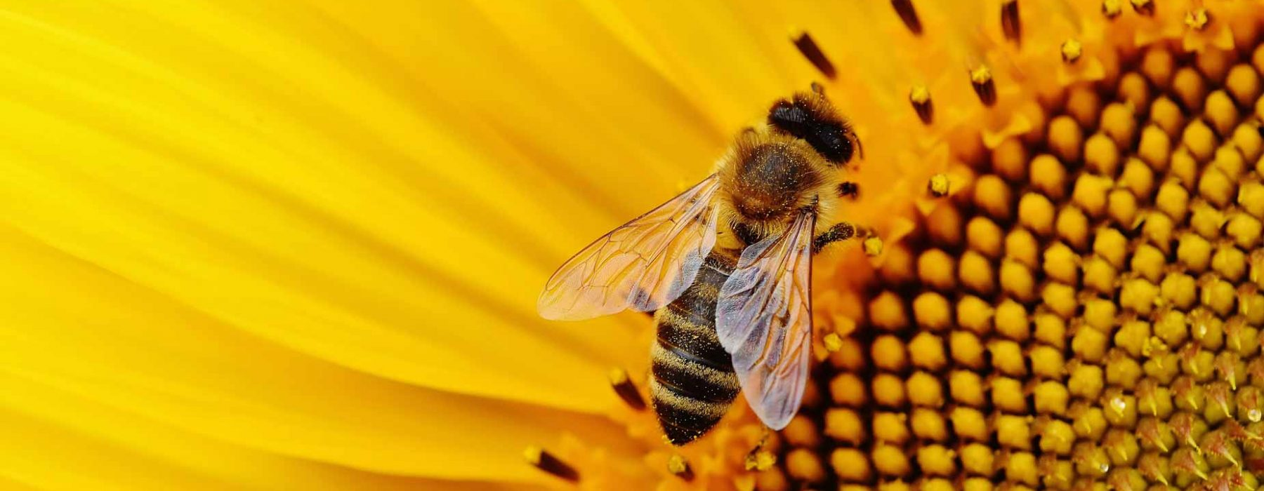 Pure wellness: when the beehive marries scientific research